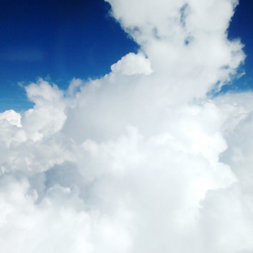 conejo nube 1