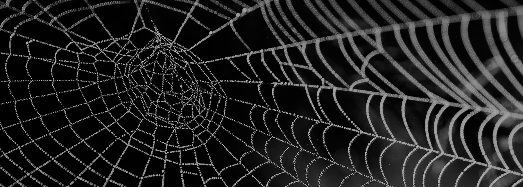 Link building y SEO: Hacer «ruido» en la web es clave